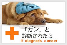 「ガン」と診断されたら